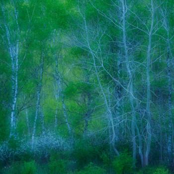 GDT-Naturfotograf des Jahres 2017