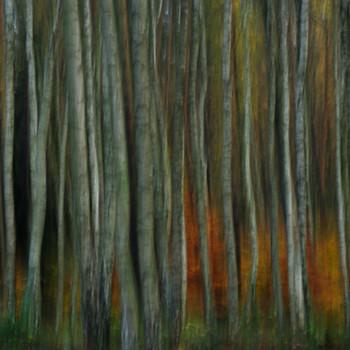 """""""Wald(an)sichten"""""""