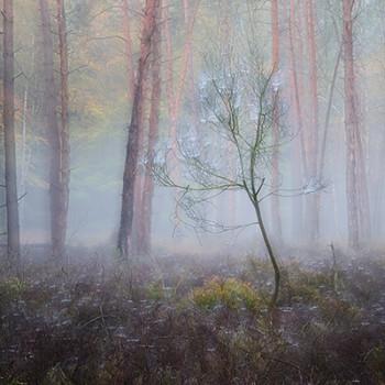 Portfolio von Fotografien im Jugendwaldschulheim Steinmühle