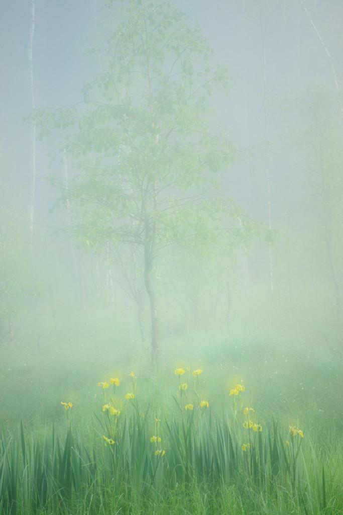 Frühling_CMU1686_1._002
