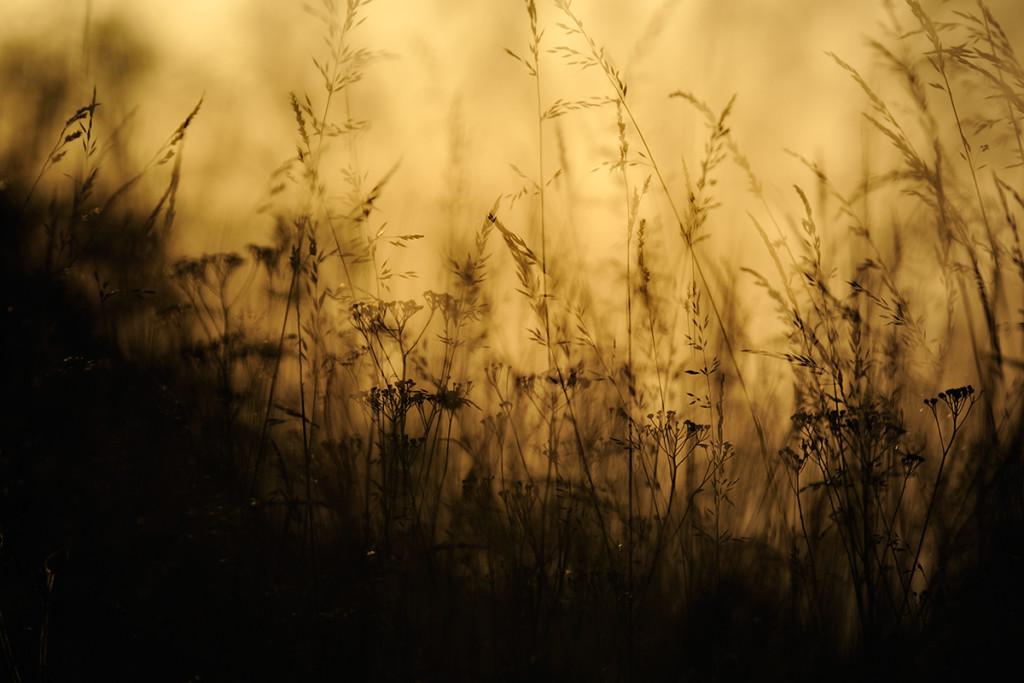 Herbst_CMU0271.jpg._007