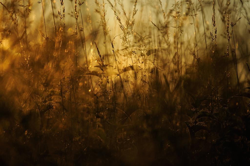 Herbst_CMU0513.jpg._028