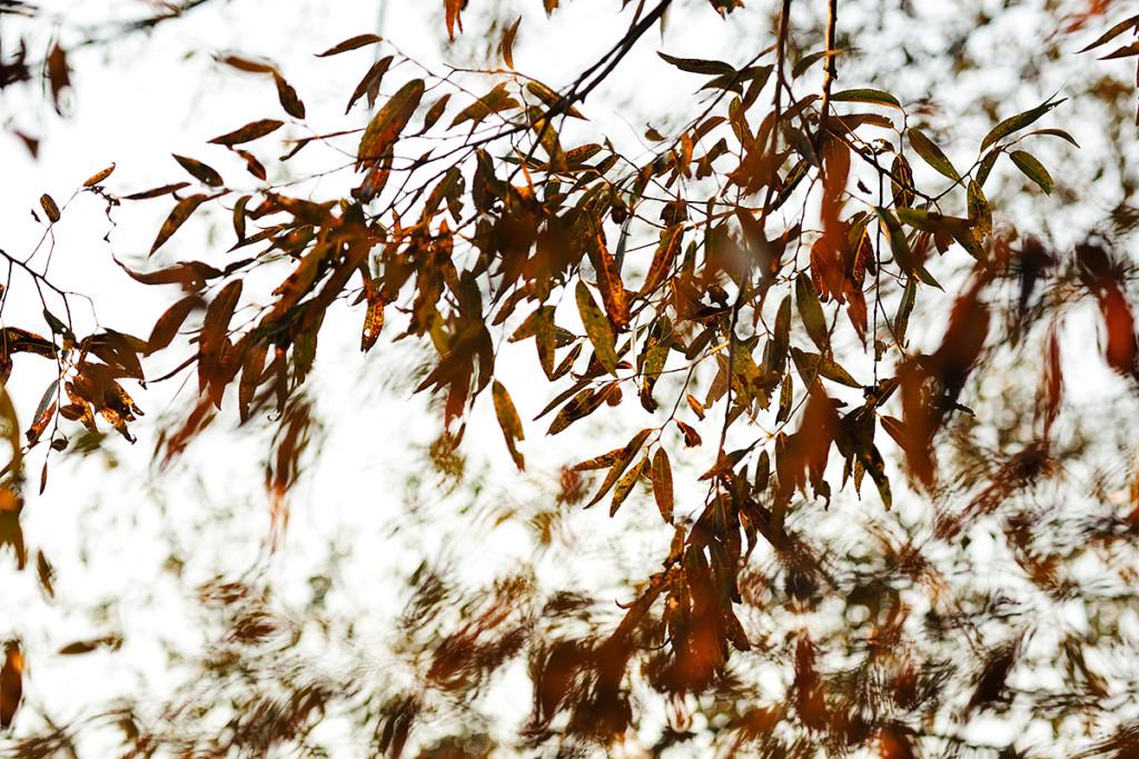 Herbst_CMU2022.jpg._009