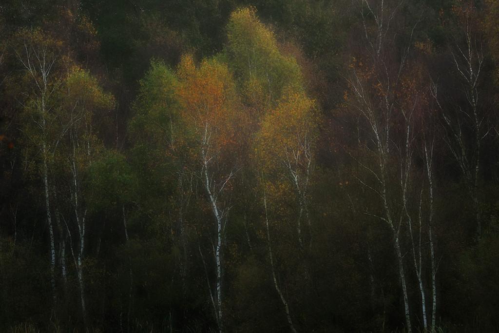 Herbst_CMU2357.jpg._006
