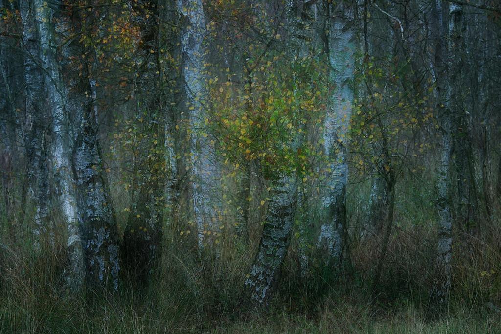 Herbst_CMU2457.jpg._004