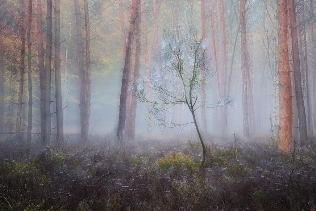 Herbst_CMU2822.jpg._014