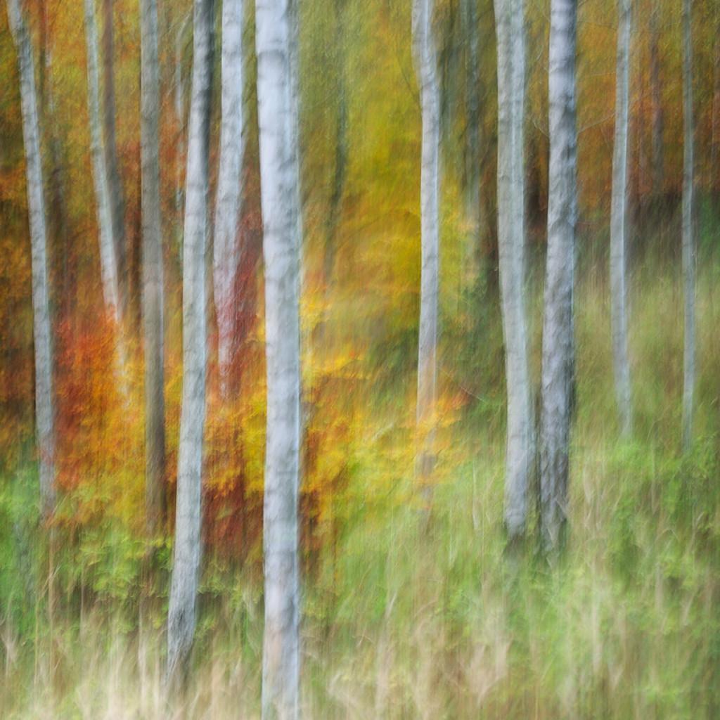 Herbst_CMU3302.jpg._011