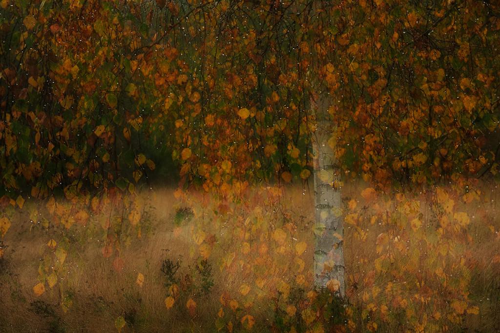 Herbst_CMU3457.jpg._021
