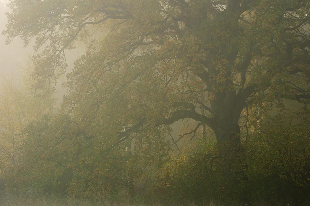Herbst_CMU3607.jpg._008
