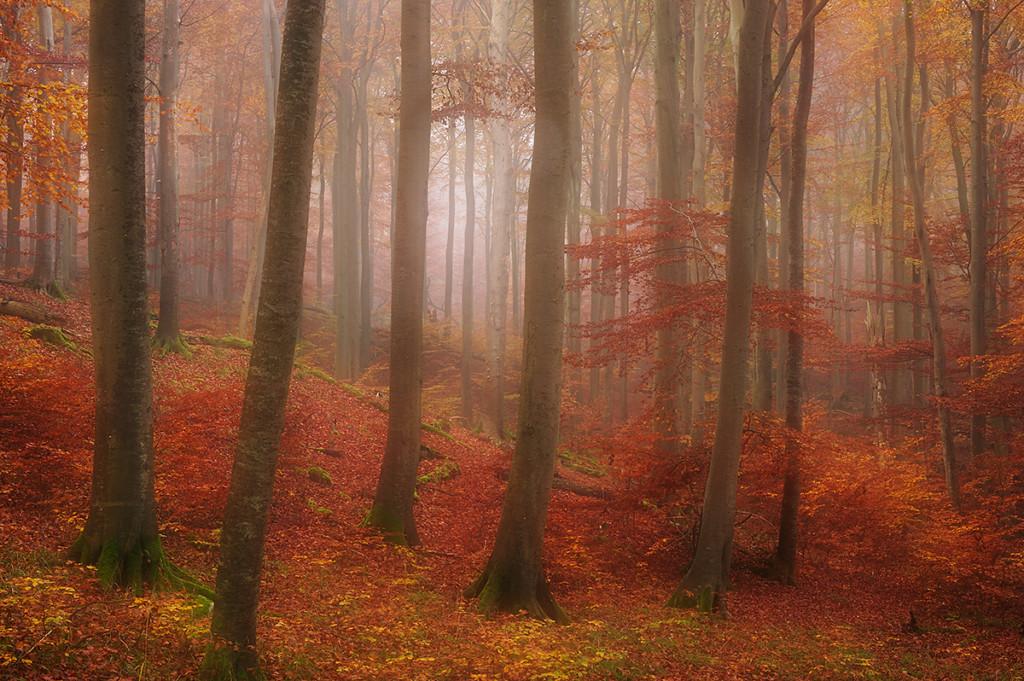 Herbst_CMU4311.jpg._019
