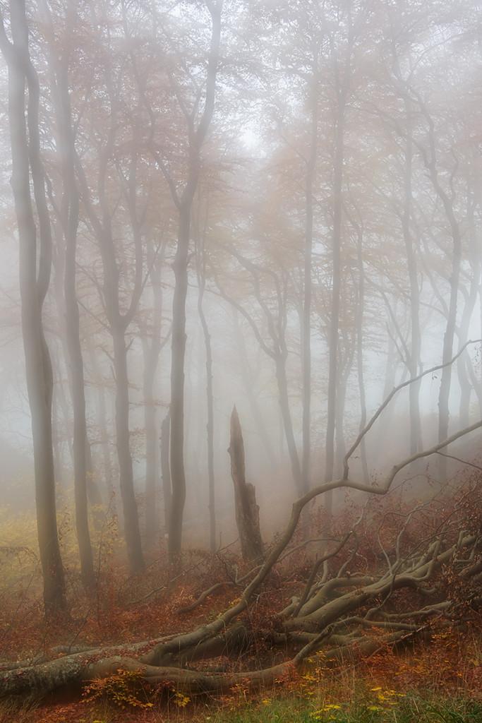 Herbst_CMU4470.jpg._020