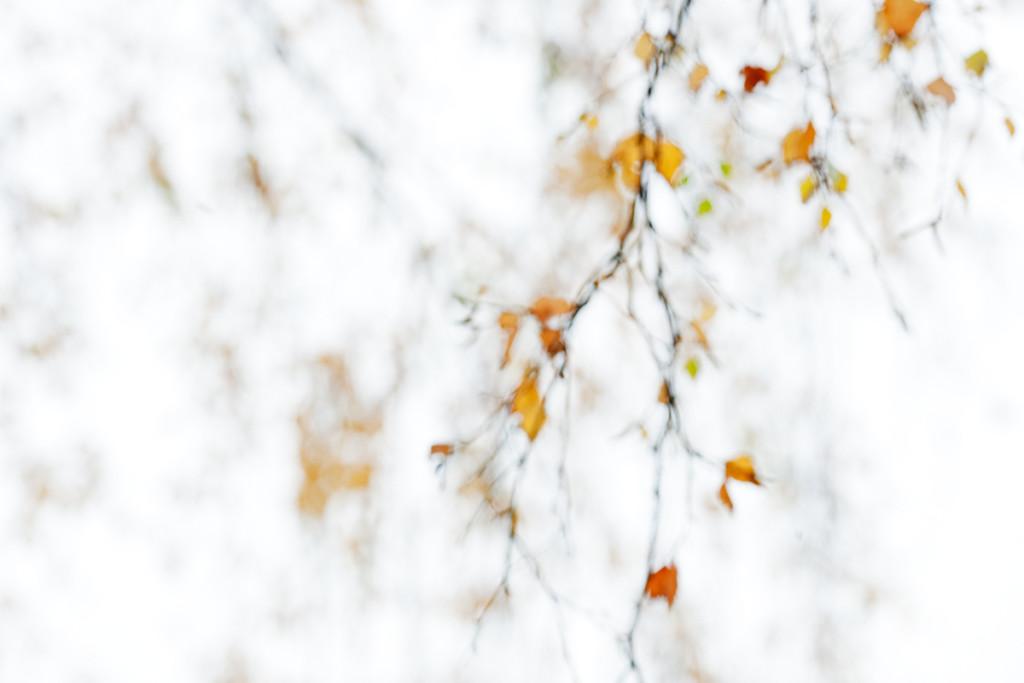 Herbst_CMU6283_1.jpg._012
