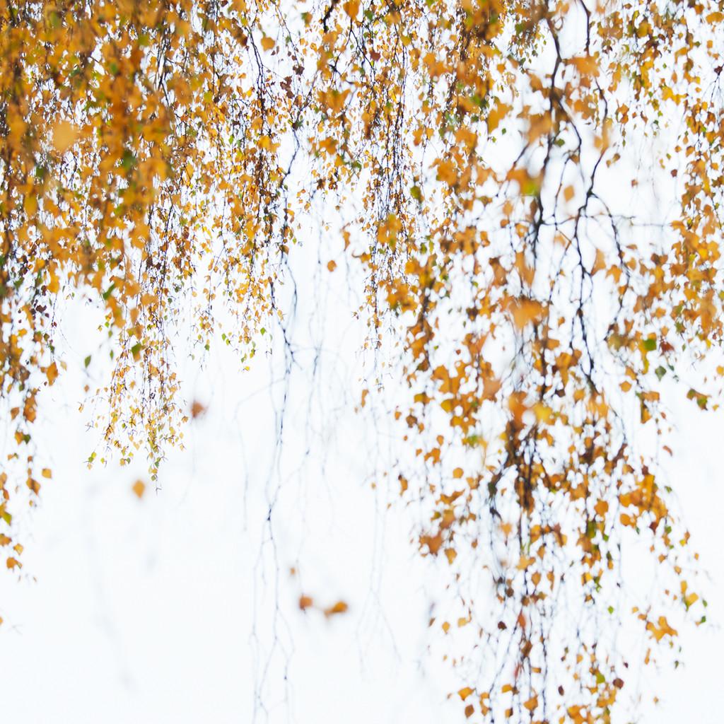 Herbst_CMU6299.jpg._025