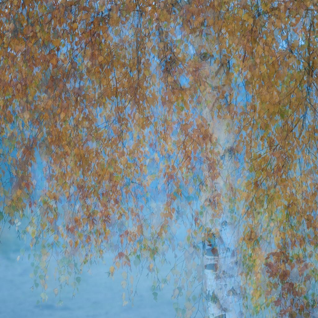 Herbst_CMU6469.jpg._002