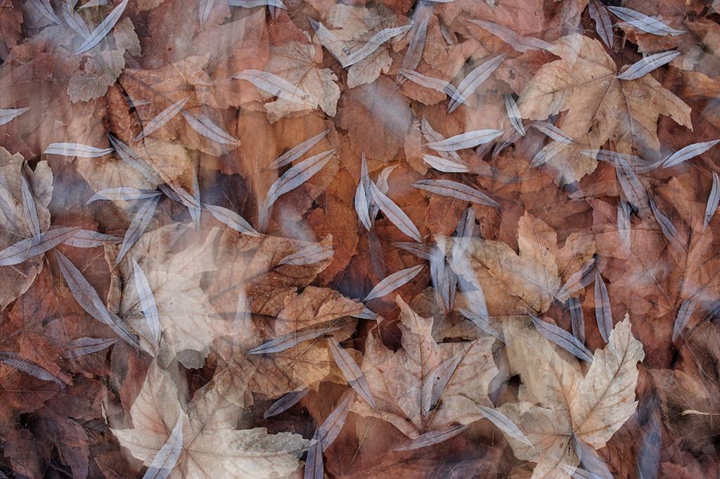Herbst_CMU6480.jpg._023
