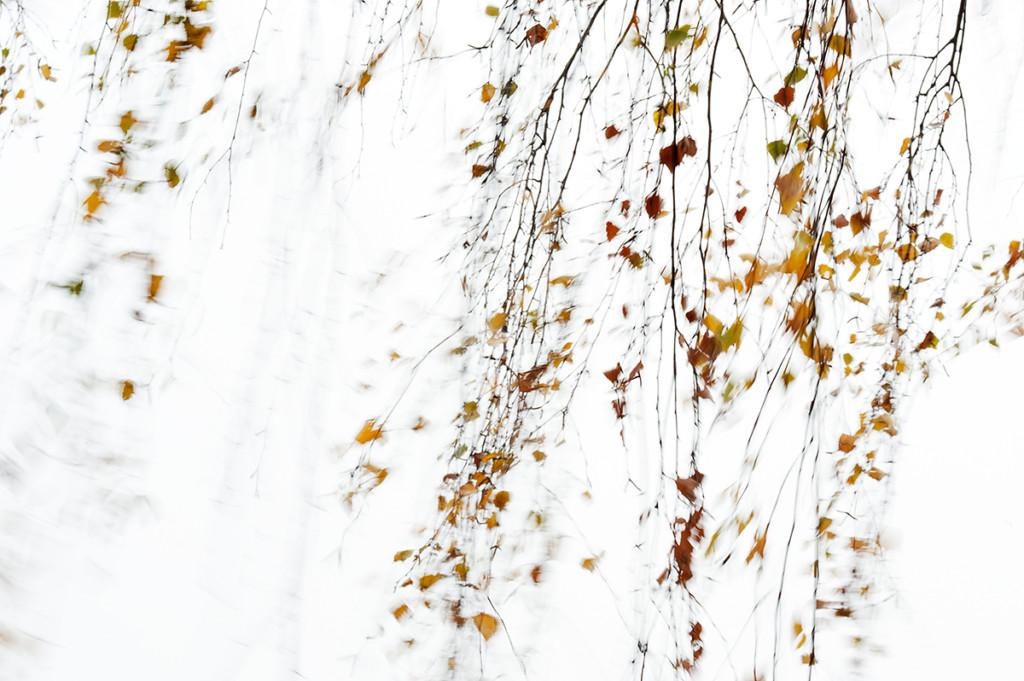 Herbst_CMU7488.jpg._024