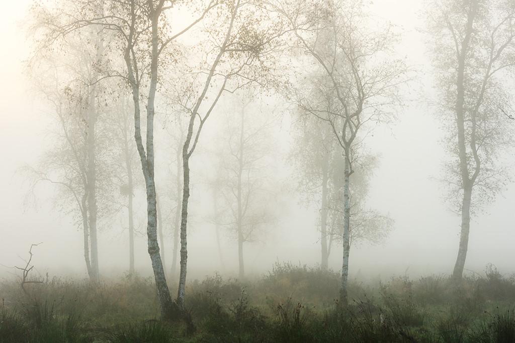 Herbst_CMU7897.jpg._036