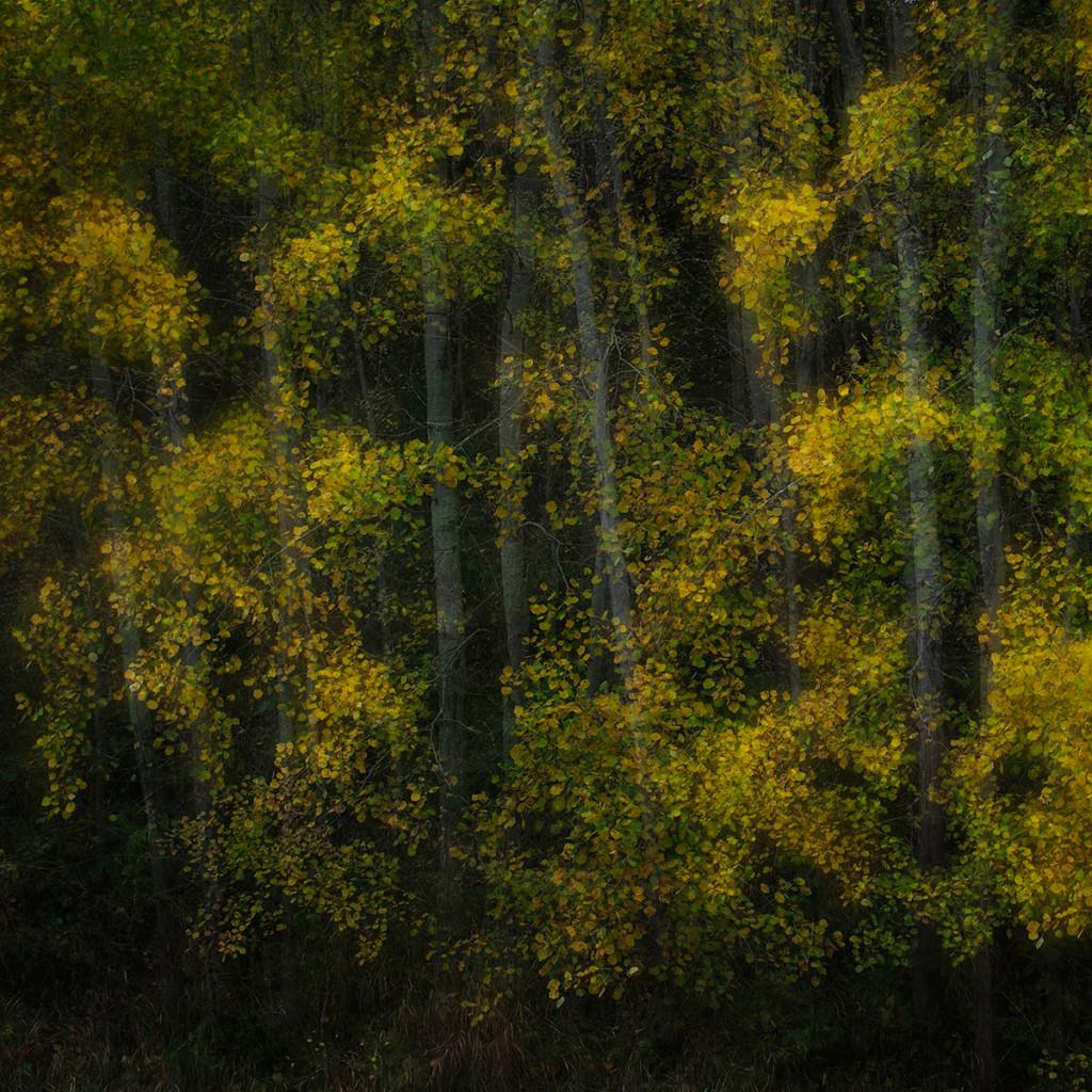 Herbst_CMU8677.jpg._032