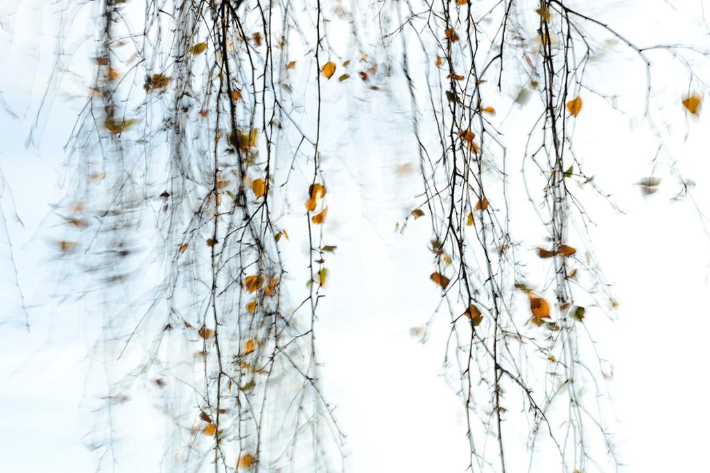 Herbst_CMU8933.jpg._039