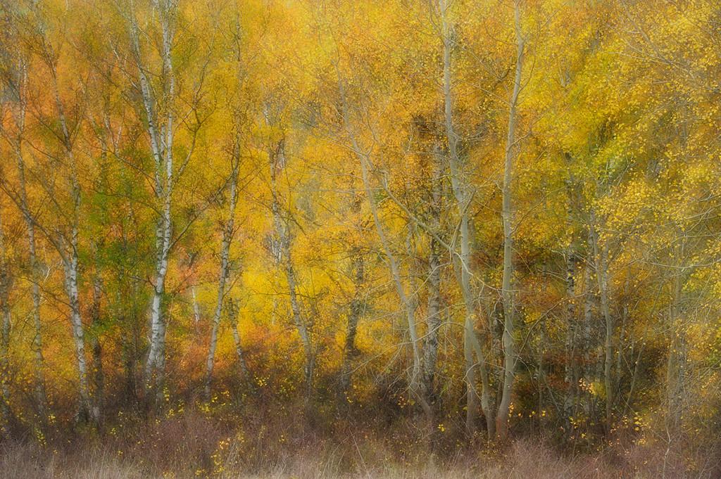 Herbst_CMU9031.jpg._037