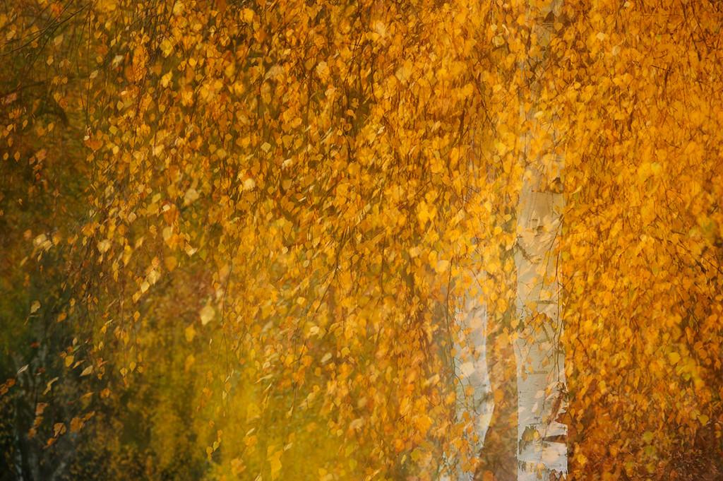 Herbst_CMU9394.jpg._042