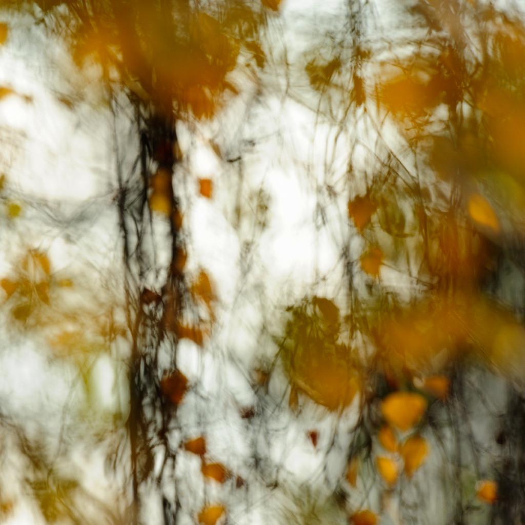 Herbst_CMU9674.jpg._035