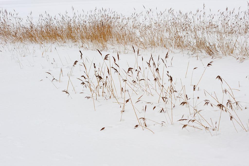 WinterClaudia_Mueller_CMU9761._019