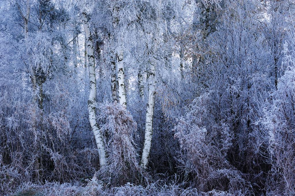 Winter_CMU0126._005