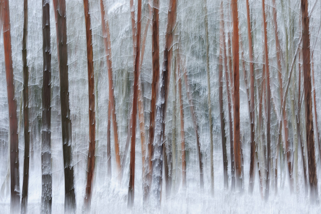 Winter_CMU4482._030