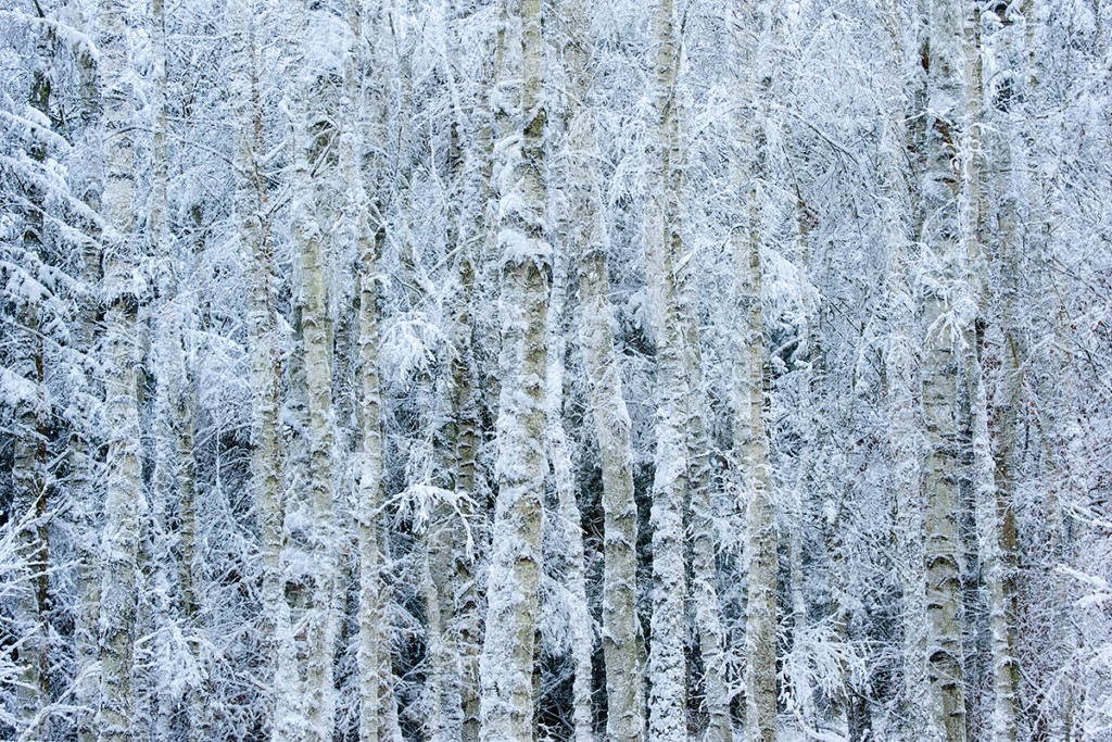 Winter_CMU7153_028