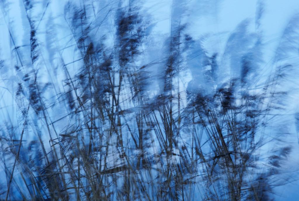 Winter_CMU8750._041