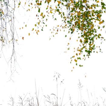 Wettbewerb GDT-Naturfotograf 2019